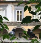 Conferenza di Massimo Luciani giovedì 20 febbraio